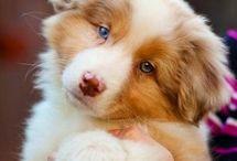 io amo i ❤ cuccioli!! / Pictures of Little Pets