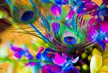 إ  colorfull colorfull colorfull  إ / by Tina Smith