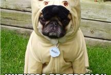 Animals in costumes / Just a bunch of funny photos of animals that love to be dressed up :D
