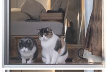 Smart Pets / Of Mice and Men... No, no men, animals :)