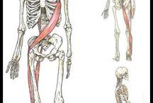 Anatomy made simple
