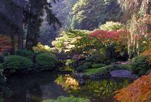 Japanse tuinen / De tuinen in dit bord zijn Japans of in Japanse style. Ideaal om tuinideeën en inspiratie op te doen.