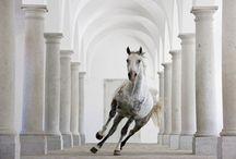 paradise horses