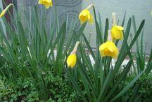 voglia di primavera / i miei primi fiori