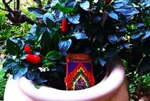 Garden Joy / Things in my humble garden,that I like / by Reyn Mon
