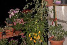 Ricette di cucina, cura dell'ambiente e della natura / Ricette di cucina, cura dell'ambiente e della natura