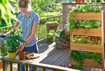 Balkon - Urban Gardening