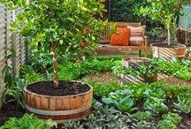 Designing vegetable garden