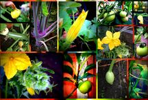 My stuff / from gardening to recycling to crafts and DIY... my quirky moments :)