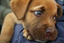 Cute! / by Christy Oberlin