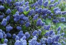 My perfect garden - flowers ideas