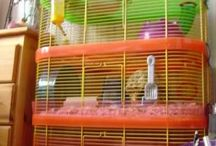 Hamster cages/toys/things