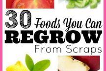 Regrow food