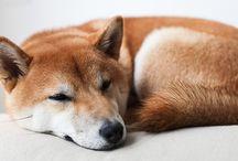 Puppy Love / by Debra Schreiber