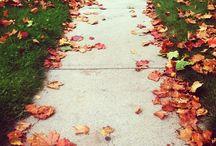 Fall ♡♡♡♡♡♡♡♡♡