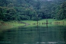Forest Tourism in Kerala / Kerala has a lot of Forests and visiting them is an easy way to relax get away from the heat and tensions of this busy life