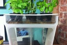 Aquaponics / by Heather Candanedo