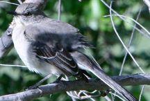 Birds from all over (Bedford Audubon) / Bedford Audubon Society Nonprofit explores birds from across the globe