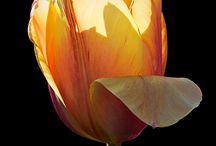 Bloemen fotografie / Foto's en macrofoto's van bloemen