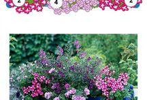 balkon virágok