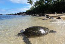 Hawai - Oahu