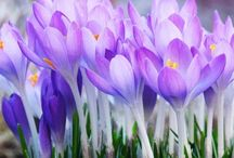 Spring is in the Air! / by Susan Henderson