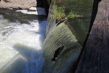 Salmon Run / Peak season for viewing returning salmon in Tumwater Falls Park on the Deschutes River begins as early as late August and can end as late as mid-October.