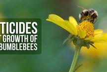 Greener Gardening / Sustainable gardening, organic practices in the garden and attracting pollinators