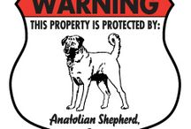 Anatolian Shepherd Signs and Pictures / Warning and Caution Anatolian Shepherd Signs. https://www.signswithanattitude.com/anatolian-shepherd-signs.html
