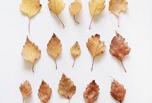 | autumn |