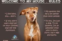 Greyhounds / Galgos
