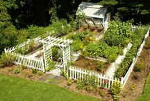 garden & beyond / Garden and Yard Inspiration