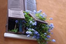 windows / by Marta Vinci
