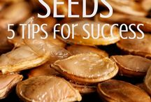 Saving Seeds / Want to be even more sustainable? Learn how to save your own seeds for next year's season in the garden.
