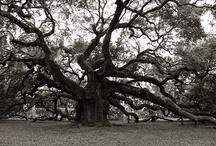 BREATHTAKING TREES.. / by Sario