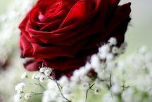 81 A Rode bloemen / Als ze maar rood zijn