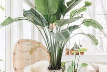 Botanical home