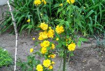 Nature of my garden / Flowers