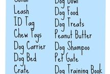 What you need for dog
