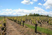 Domaine Dupeuble / A 25 km au nord-ouest de Lyon et à 15 km au sud de Villefranche-sur-Saône, le Château des Pertonnières se trouve sur la commune de Le Breuil, dans le sud du Beaujolais. Les vignes sont orientées Sud-est, Sud et Sud-ouest et s'étendent sur 8 communes différentes.