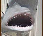 Shark Mounts By Mount This Fish Company / Shark mount replicas produced by Mount This Fish Company.