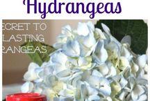 flower tips/hints/ideas