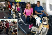 Flying with Dogs / Flying with Dogs