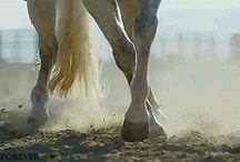 Equine Gifs