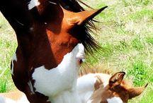 Kone a Žriebätká
