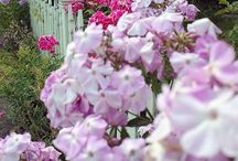 My Garden (Bella's Rose Cottage)