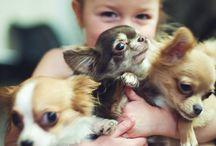 Dieren / Schattige dieren fotos
