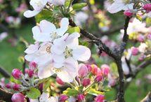 Frühlingsblüten Baum