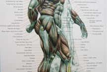 Anatomy for Artists / by Jeffrey Zeldman