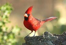 Battiste Bed & Birds